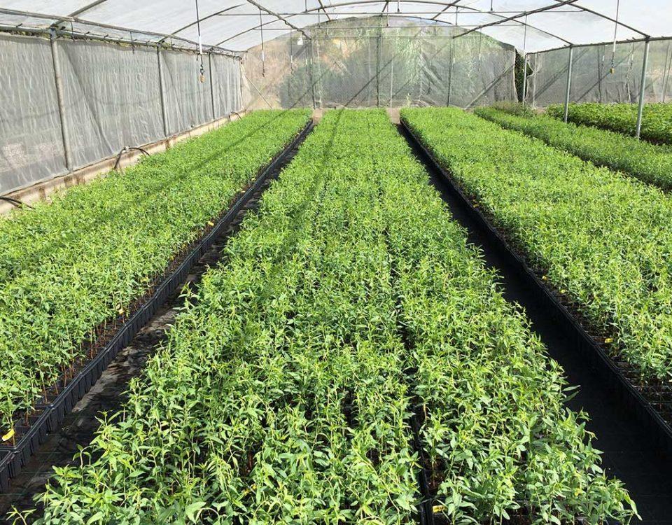 Alharabe vivero forestal viveros forestales en moratalla for Funcion de un vivero escolar